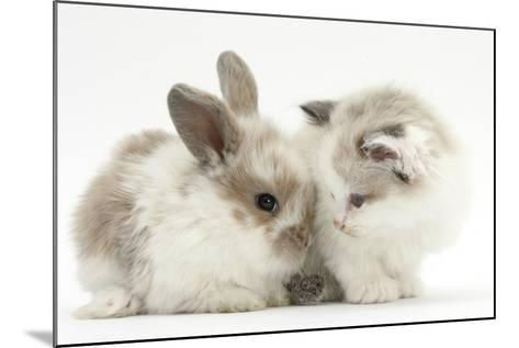 Colourpoint Kitten with Baby Rabbit-Mark Taylor-Mounted Photographic Print