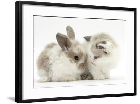 Colourpoint Kitten with Baby Rabbit-Mark Taylor-Framed Art Print