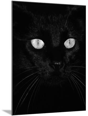 Black Domestic Cat, Eyes with Pupils Closed in Bright Light-Jane Burton-Mounted Photographic Print