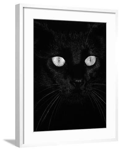 Black Domestic Cat, Eyes with Pupils Closed in Bright Light-Jane Burton-Framed Art Print