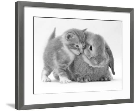 Domestic Kitten (Felis Catus) Next to Bunny, Domestic Rabbit-Jane Burton-Framed Art Print