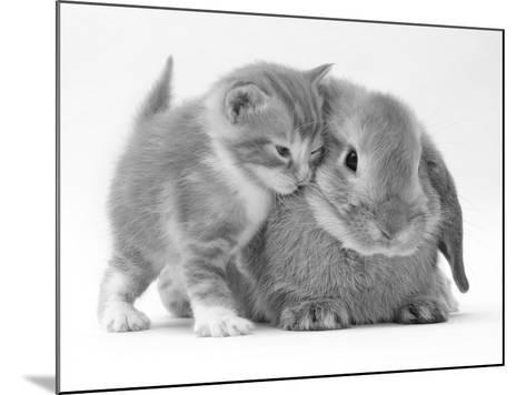 Domestic Kitten (Felis Catus) Next to Bunny, Domestic Rabbit-Jane Burton-Mounted Photographic Print