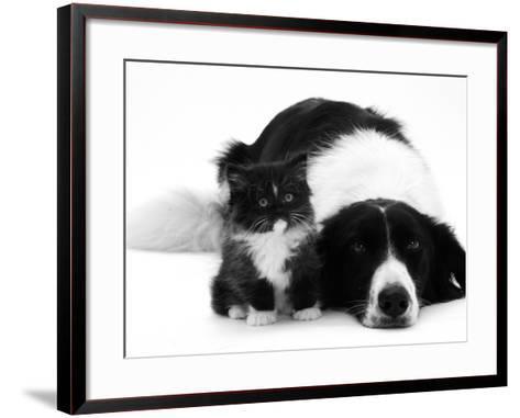 Black-And-White Border Collie Lying Chin on Floor with Black-And-White Kitten-Jane Burton-Framed Art Print
