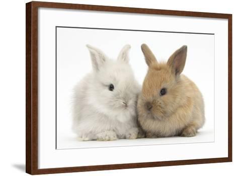 Two Baby Lionhead Cross Lop Bunnies-Mark Taylor-Framed Art Print