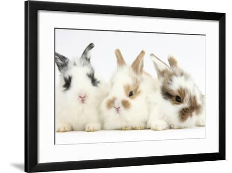 Three Cute Baby Bunnies Sitting Together-Mark Taylor-Framed Art Print
