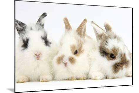 Three Cute Baby Bunnies Sitting Together-Mark Taylor-Mounted Photographic Print