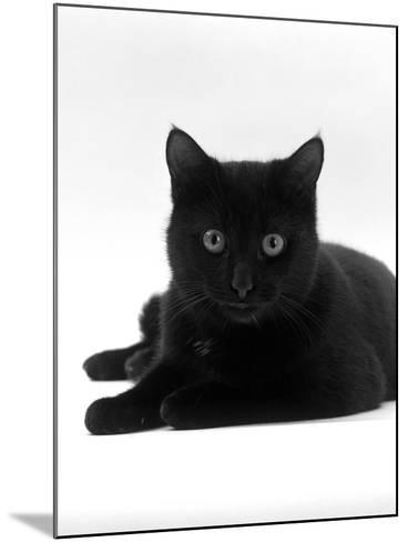 Domestic Cat, Young Black Male-Jane Burton-Mounted Photographic Print