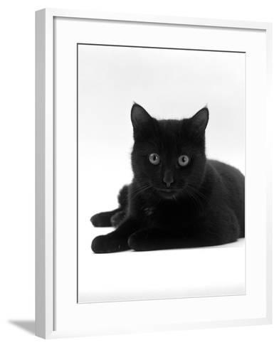 Domestic Cat, Young Black Male-Jane Burton-Framed Art Print
