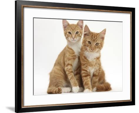 Portrait of Two Ginger Kittens-Mark Taylor-Framed Art Print