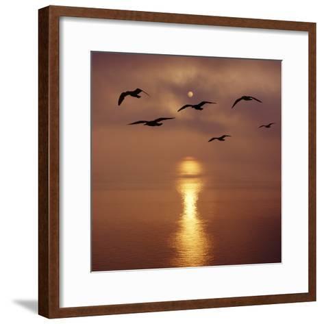 Sunrise over the Sea with Seagulls, UK-Mark Taylor-Framed Art Print