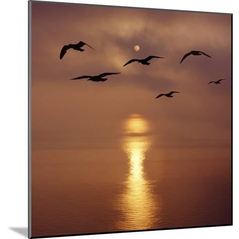 Sunrise over the Sea with Seagulls, UK-Mark Taylor-Mounted Photographic Print