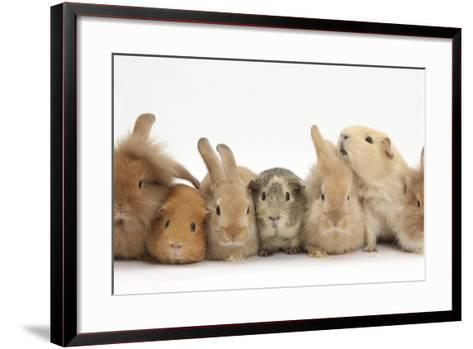 Assorted Sandy Rabbits and Guinea Pigs-Mark Taylor-Framed Art Print