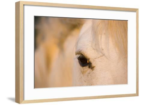 White Camargue Horse Close-Up of Head, Camargue, France, May 2009-Allofs-Framed Art Print