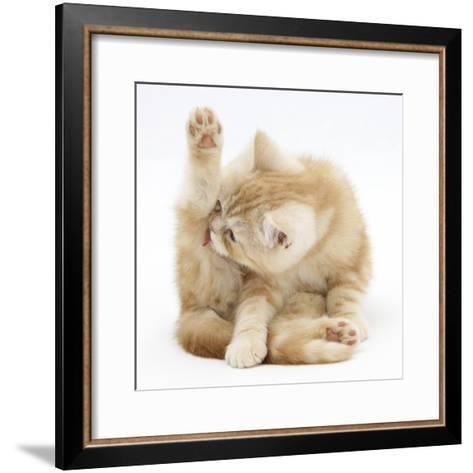 Ginger Kitten 'Funnel-Grooming'-Mark Taylor-Framed Art Print
