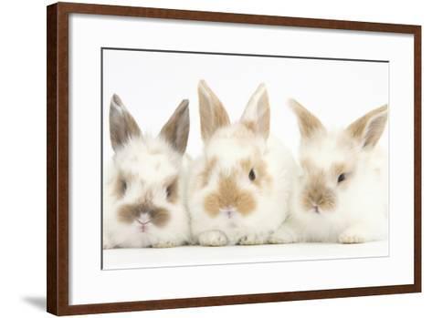 Three Cute Baby Rabbits in a Row-Mark Taylor-Framed Art Print