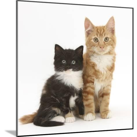 Ginger and Black-And-White Kittens-Mark Taylor-Mounted Photographic Print