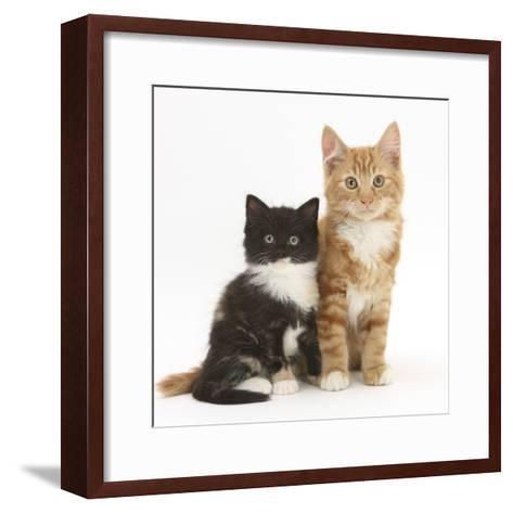 Ginger and Black-And-White Kittens-Mark Taylor-Framed Art Print