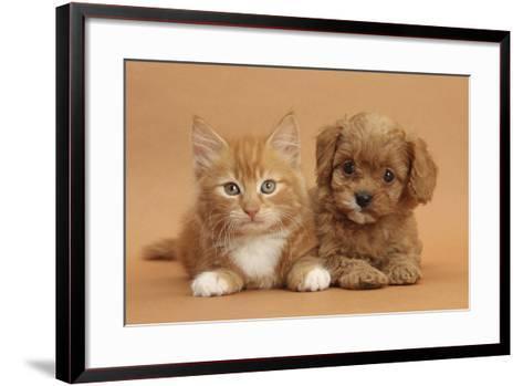 Cavapoo Puppy and Ginger Kitten-Mark Taylor-Framed Art Print