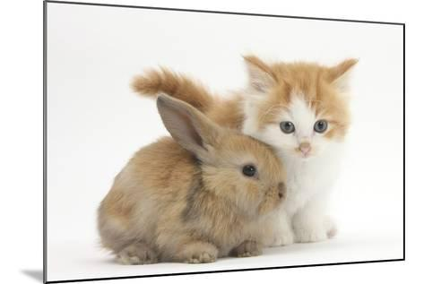 Ginger-And-White Kitten Baby Rabbit-Mark Taylor-Mounted Photographic Print