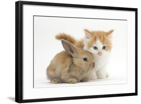 Ginger-And-White Kitten Baby Rabbit-Mark Taylor-Framed Art Print
