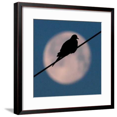 A Mourning Dove Sits Atop a Utility Wire as the Full Moon Sets Over Grand Isle--Framed Art Print