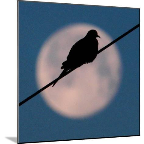A Mourning Dove Sits Atop a Utility Wire as the Full Moon Sets Over Grand Isle--Mounted Photographic Print