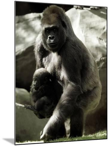 Mother Gorilla Julia--Mounted Photographic Print