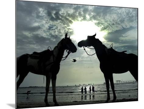 Horses, Used for Joyrides, Stand on the Beach--Mounted Photographic Print