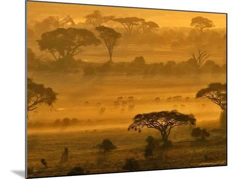 Herbivores at Sunrise, Amboseli Wildlife Reserve, Kenya-Vadim Ghirda-Mounted Photographic Print