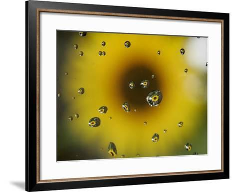 A Sunflower is Reflected in Raindrops on a Car Window--Framed Art Print