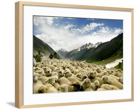 Gujjar Nomadic Shepherds Herd Their Sheep on the Outskirts of Srinagar, India--Framed Art Print