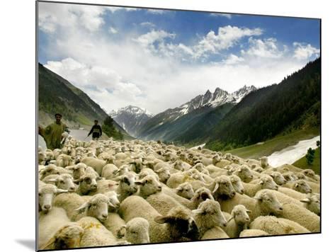 Gujjar Nomadic Shepherds Herd Their Sheep on the Outskirts of Srinagar, India--Mounted Photographic Print