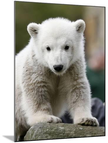 Sick Polar Bear Cub, Berlin, Germany-Michael Sohn-Mounted Photographic Print