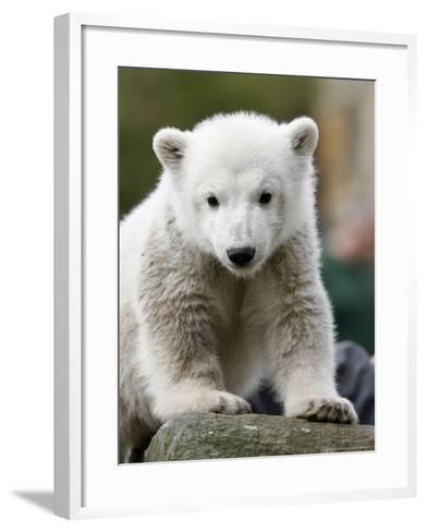 Sick Polar Bear Cub, Berlin, Germany-Michael Sohn-Framed Art Print