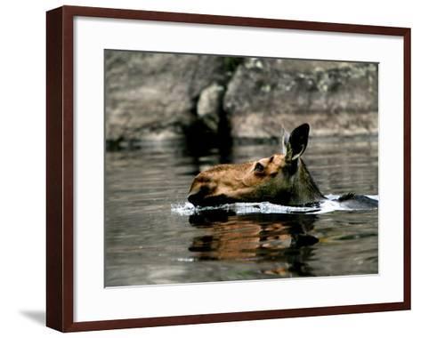 A Moose Cools Off--Framed Art Print