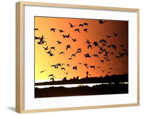 A Flock of Waterfowl--Framed Art Print