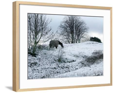 Horse Grazes on a Snow Covered Field in Bearsted in Kent, England--Framed Art Print