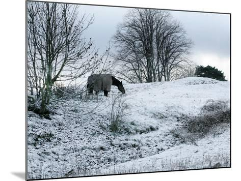 Horse Grazes on a Snow Covered Field in Bearsted in Kent, England--Mounted Photographic Print