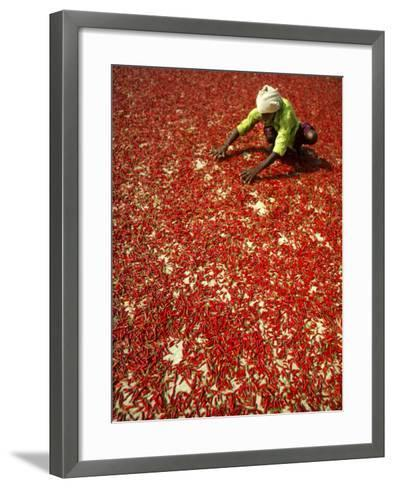 Villager Dries Red Chilies at Rambha, India--Framed Art Print