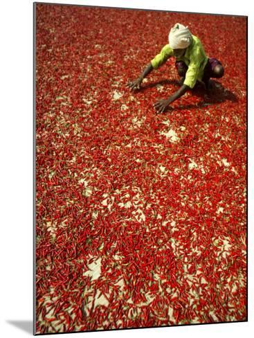 Villager Dries Red Chilies at Rambha, India--Mounted Photographic Print