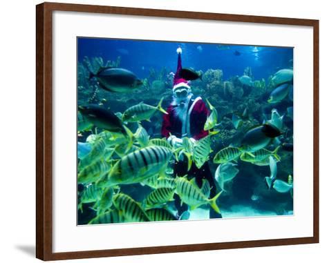 Diver Dressed as Santa Claus Feeds Fish as Part of Christmas Celebrations, Aquarium in Kuala Lumpur--Framed Art Print
