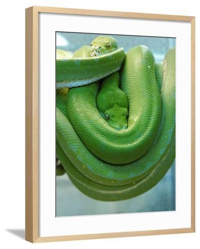 Pets Special Snakes-Mark Gilliland-Framed Art Print