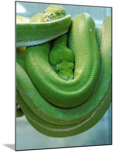 Pets Special Snakes-Mark Gilliland-Mounted Photographic Print
