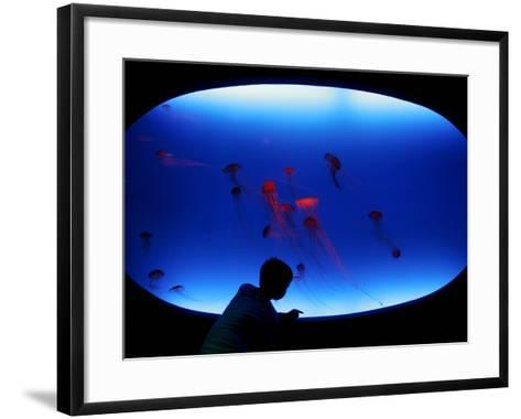 A Visitor Looks at the Jellyfish Called Brown Sea Nettle--Framed Art Print