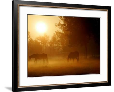 Horses Graze in a Meadow in Early Morning Fog in Langenhagen Near Hanover, Germany, Oct 17, 2006-Kai-uwe Knoth-Framed Art Print