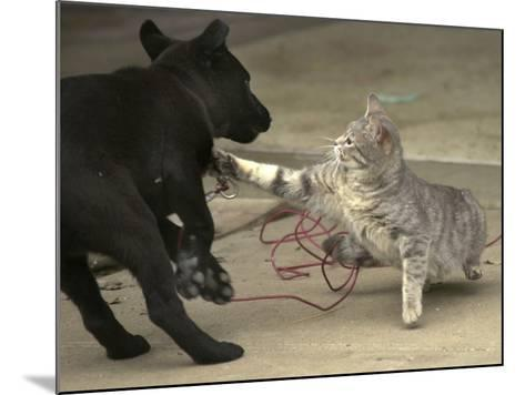 After Being Woken by a Playful Puppy, a Cat Gets its Revenge--Mounted Photographic Print