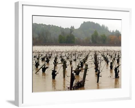 A Russian River Vineyard Remains Flooded Near Forestville, Calif.--Framed Art Print