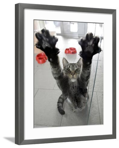 Cat Stretches on a Glass Door in the Animal Shelter in Berlin--Framed Art Print