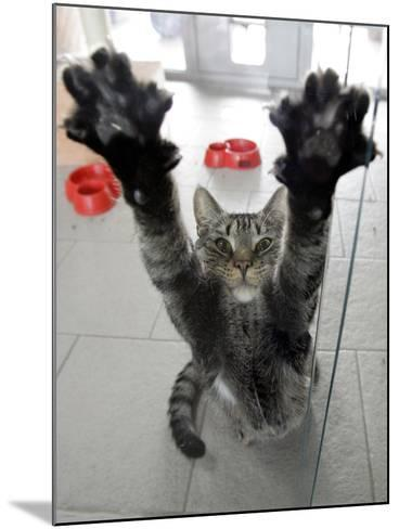 Cat Stretches on a Glass Door in the Animal Shelter in Berlin--Mounted Photographic Print