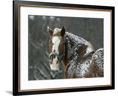 Workhorse Braves the Snow and Falling Temperatures at a Farm in Bainbridge Township, Ohio--Framed Art Print